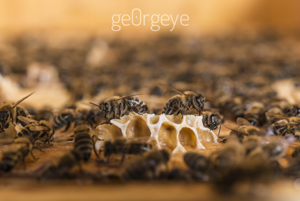 greeenovation_bienen_georgeye-55